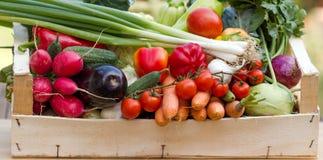 Organiska grönsaker Arkivfoto