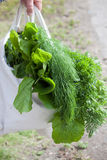organiska grönsaker Royaltyfri Foto
