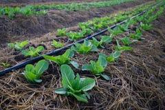 organiska grönsaker Arkivbilder