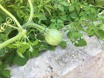 organiska grönsaker Royaltyfria Foton