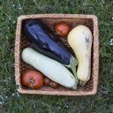 organiska grönsaker för korg Fotografering för Bildbyråer
