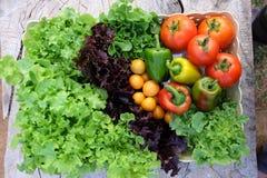 organiska grönsaker för korg Royaltyfria Bilder