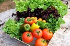 organiska grönsaker för korg Arkivbild
