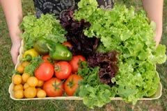 organiska grönsaker för korg Royaltyfri Fotografi