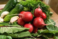 Organiska grönsaker för ny vår Royaltyfria Foton