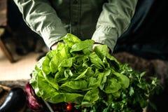 Organiska grönsaker på trä arkivbilder