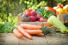 Organiska grönsaker - sunt äta royaltyfri bild