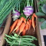 Organiska grönsaker på en bondemarknad Fotografering för Bildbyråer