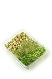 organiska groddar Royaltyfri Fotografi