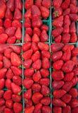 organiska jordgubbar Arkivfoton