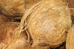 Organiska kokosnötter på den lokala marknaden Royaltyfria Foton