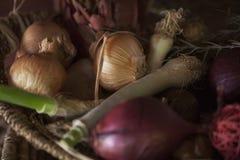 Organiska lökar från trädgården Arkivbilder