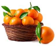 Organiska mogna mandariner i korg på vit bakgrund Arkivbilder