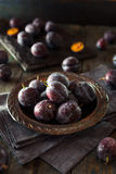 Organiska mogna purpurfärgade Prune Plums Royaltyfria Bilder