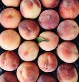 Organiska mogna saftiga persikor, closeup royaltyfri foto