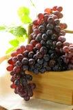 Organiska mogna svarta druvor Fotografering för Bildbyråer