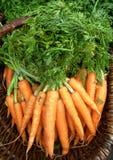 organiska morötter Arkivbild