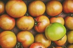 Organiska naturliga ofullbordade grönsaker med handikapp i en pappers- ask på marknaden Naturliga ekologiska gröna tomater i baza Royaltyfria Bilder