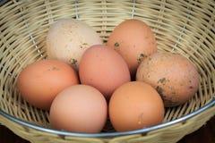 Organiska nya ägg för lantgård Royaltyfri Bild