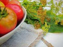 Organiska nya tomater arbeta i trädgården hemifrån i en bunke Örter och pepparrot Fotografering för Bildbyråer