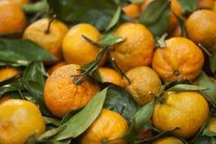 Organiska orange mandariner och clementines Royaltyfri Bild