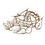 Organiska päron för logo Arkivfoton