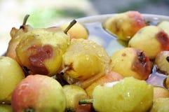 Organiska päron med vattensmå droppar på dem royaltyfri foto