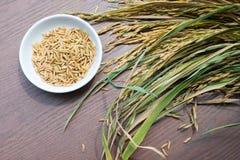 Organiska Paddy Seeds, ris på träbakgrund, sunt f royaltyfria foton