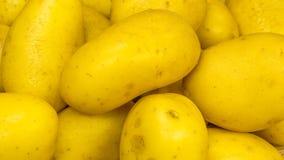 organiska potatisar royaltyfri bild