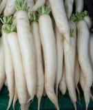 organiska rädisor för daikon Royaltyfria Foton