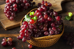 Organiska rå röda druvor royaltyfri bild