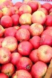 Organiska röda äpplen royaltyfri foto