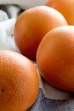 Organiska röda grapefrukter Arkivfoto