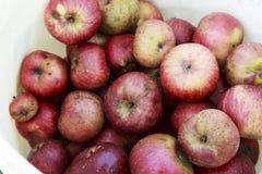 Organiska röda Johnny Apples i en plast- hink royaltyfri foto