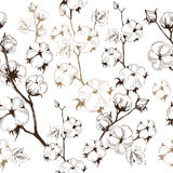 Organiska stammar av bomullsväxter på vit bakgrund Royaltyfria Bilder