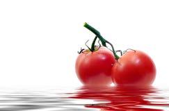 organiska tomater Royaltyfri Foto