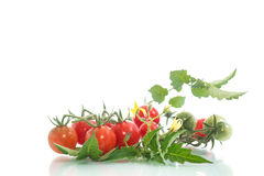 organiska tomater för Cherry Royaltyfria Bilder