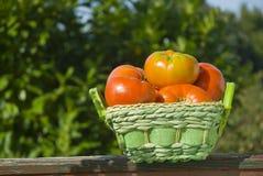Organiska tomater i en korg Arkivfoton