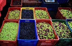 organiska typer för olika nya olivgrön Royaltyfri Bild