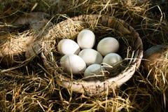 Organiska vita ägg i korg royaltyfri bild
