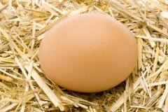 organiskt ägg 2 Fotografering för Bildbyråer