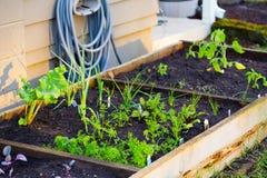 Organiskt arbeta i trädgården Arkivfoton