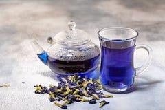 Organiskt blått te Anchan, Clitoria, fjärilsärta i den glass koppen royaltyfri foto