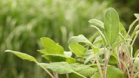 Organiskt fullvuxen vis man i trädgården stock video