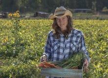 Organiskt lantbruk royaltyfria bilder