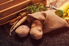 Organiskt lantbruk av persilja och potatisen fotografering för bildbyråer