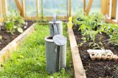 Organiskt lantbruk och att arbeta i trädgården, åkerbrukt begrepp att bevattna kan i växthus Natur arkivfoton