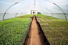Organiskt lantbruk, plantor som växer i växthus Arkivbild