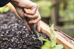 Organiskt plantera Fotografering för Bildbyråer