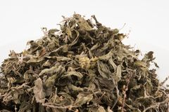 Organiskt torka gröna eller heliga Basil Ocimum tenuiflorumsidor på w royaltyfri fotografi